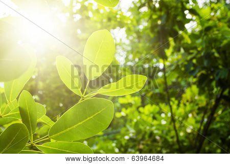 The Nature Of The Tropics. Seychelles.