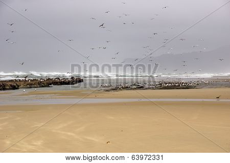 Flocks Of Seagulls Flying Along The Coastal Sand Beach