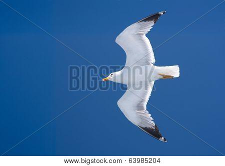 Seagull Against The Blue Sky