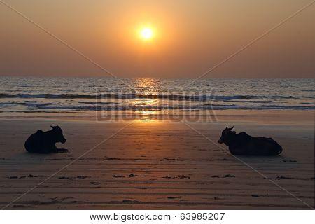 Sunset At An Indian Beach