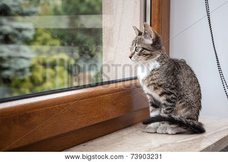 Small Grey Pet Kitten Indoor With Reflection
