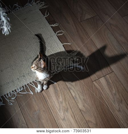 Small grey pet kitten playing indoor apartment poster