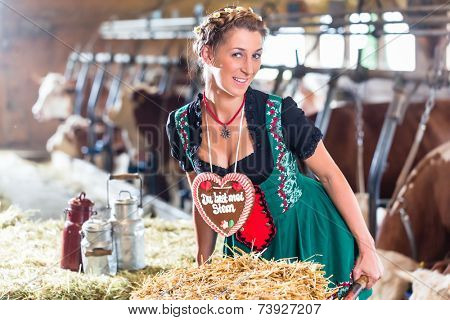 Bavarian woman driving pushcart with hay bale and German Lebkuchen through cowhouse