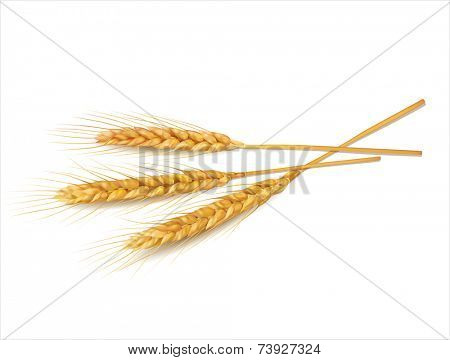 Wheat on white  background. Vector eps 10.