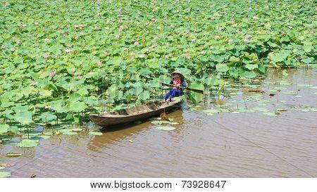 Vietnamese Village, Row Boat, Lotus Flower, Lotus Pond