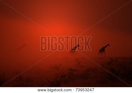 Giraffe - African Wildlife Background - Sunset Dust of Epic Beauty