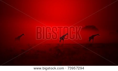 Giraffe Sunset - African Wildlife Background - Out of the Dust