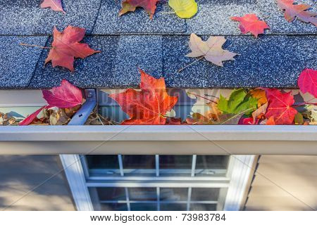 Rain gutter full of autumn leaves  poster