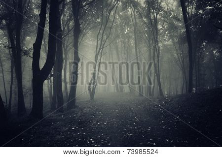 Path in dark mysterious forest with fog at night