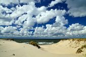 Beautiful sand dunes on the shore of the Baltic sea. Kaliningrad region Russia poster