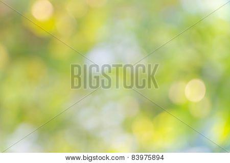 Nature Bokeh, Blurred Background