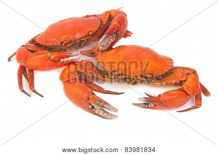 Cooked Whole Dungeness Crab