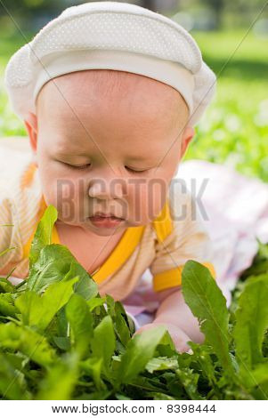 Portrait Of A Baby Lying On The Grass, Close-up
