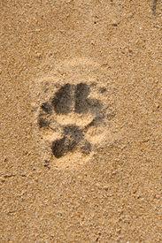 single dog paw