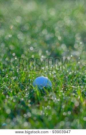 Golf Ball In Grasses With Dew Drops In Morning