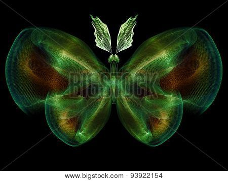 Butterfly Visualization