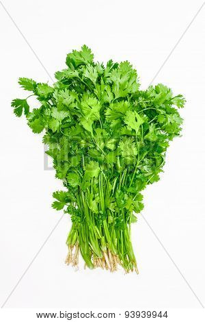 Bundle Of Coriander
