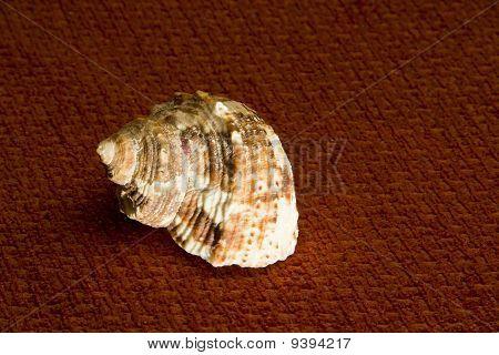 Crusty Old Spiral Seashell