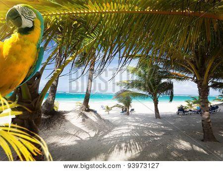 Art Vacation On Caribbean Beach Paradise