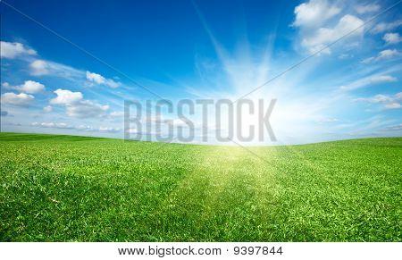 Zonsondergang zon en gebied van verse gras onder de blauwe hemel