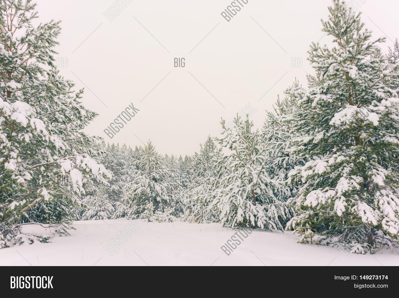 Wintry Landscape Image & Photo (Free Trial) | Bigstock