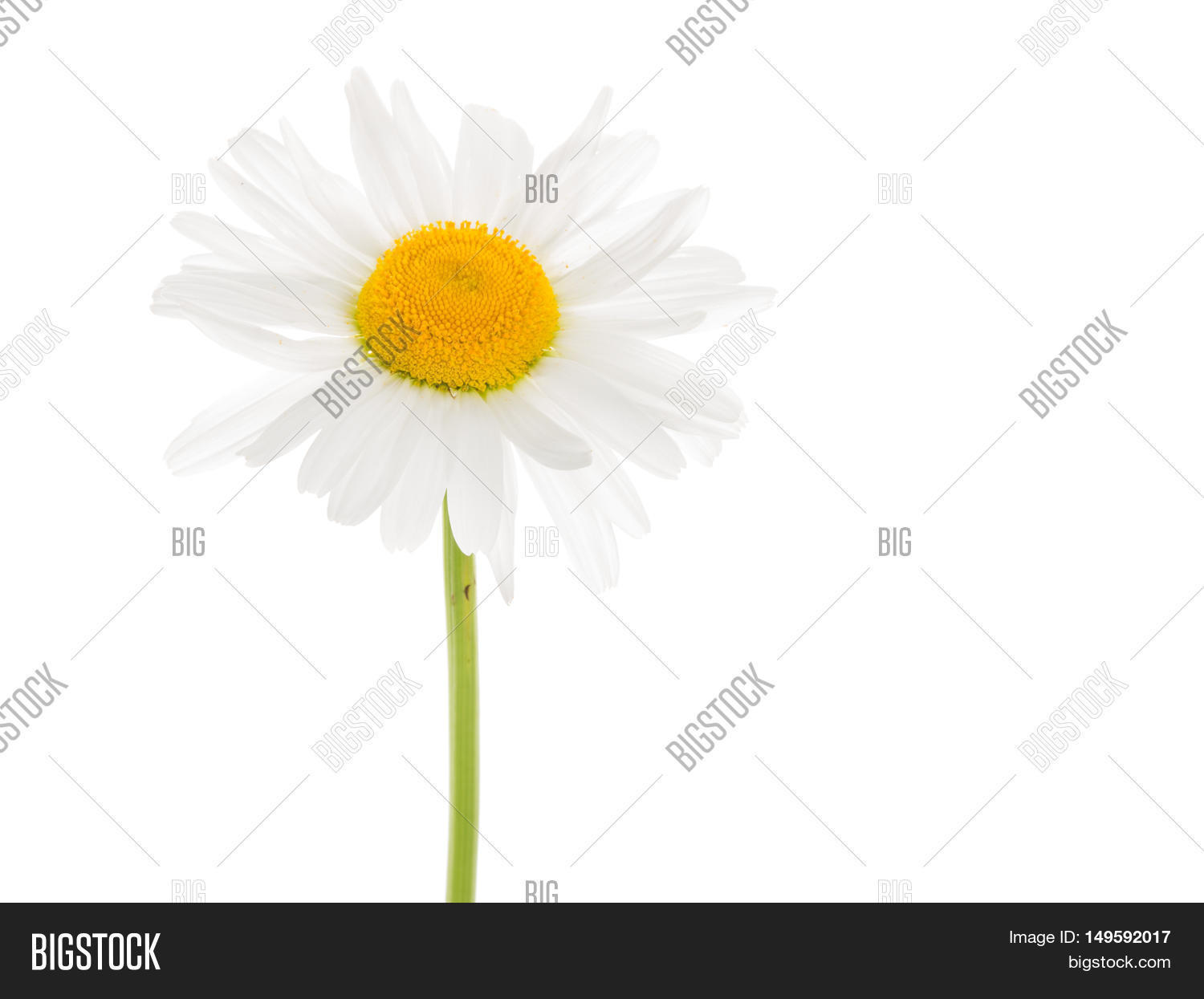 Delicate White Flower Image Photo Free Trial Bigstock