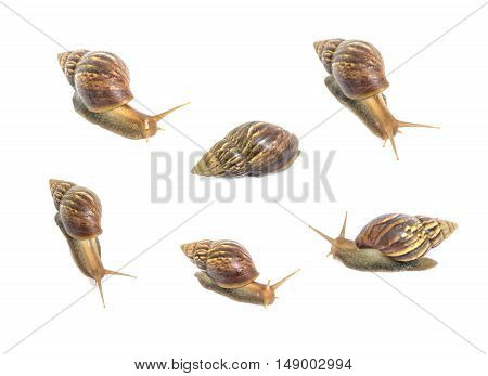 Closeup group of snail in many act isolated on white background
