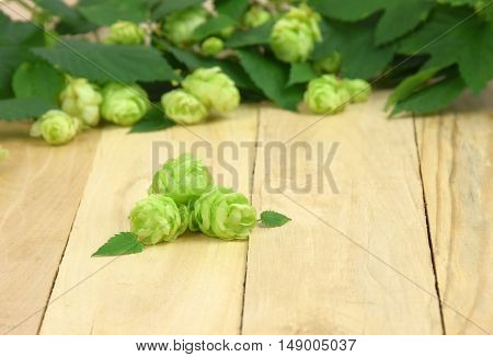 Beer production ingredient. Brewery. Fresh-picked whole hops close-up. Brewing concept wallpaper.Fresh hop cones on the wooden background.
