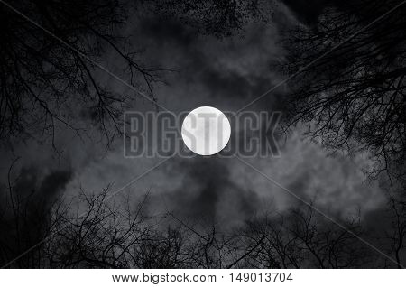 Shining full moon in the night sky and sinister night clouds -night mysterious landscape in cold tones. Night sky gothic landscape with full moon beneath the clouds and silhouettes of the bare trees
