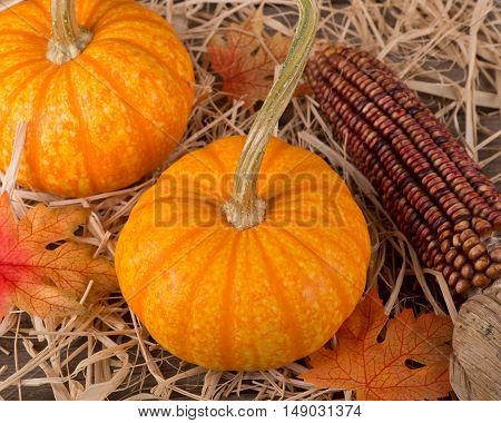 Colorful pumpkins and indian con on a straw covered surface