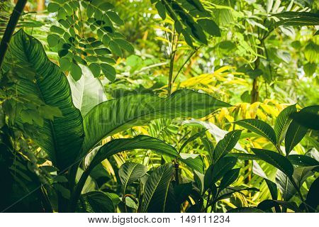 Jungle With Tropical Plants