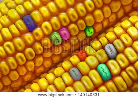 Corn seed with gmo chemical formulas. Gmo concept.
