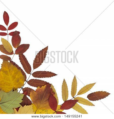 postcard with brightly colored autumn leaves with a white background isolated
