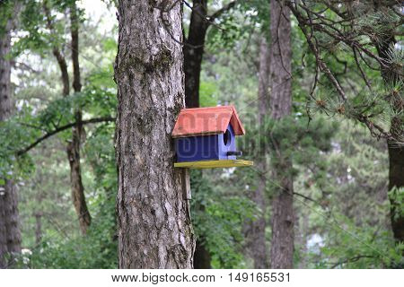 Bright wooden red and blue birdhouse mounted on a tree in the green forest