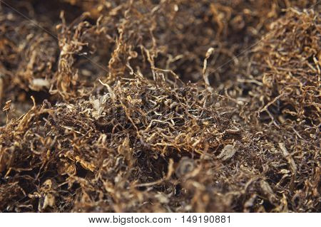 Close up background of dried tobacco smoking