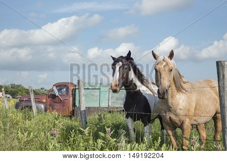 horizontal images of two horses standing side by side by the fence with an old truck in the pasture behind them in the summer time.