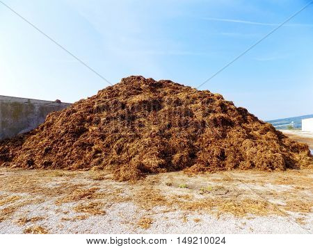 High pile of manure on farm during day
