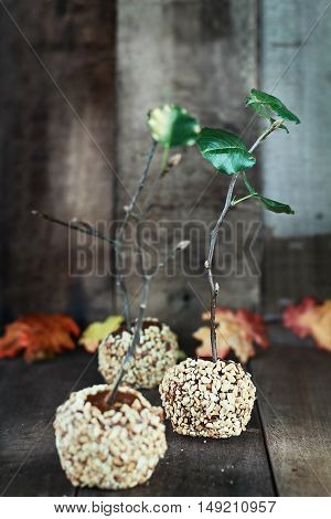Three candy apples with nuts and caramel and twigs with leaves for Halloween against a rustic wooden background. Extreme shallow depth of field with selective focus on center apple.