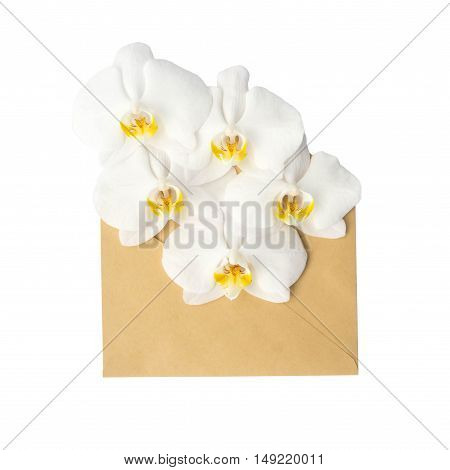 Orchid in the envelope. isolated on a white background. love letter. spring flowers.