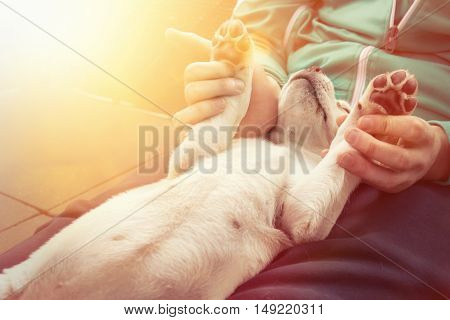 cute little dog puppy cuddles and shows paws