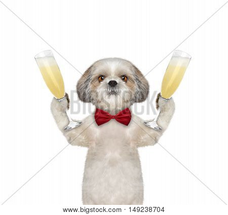 Cute dog on a holiday with a glass of champagne -- isolated on white