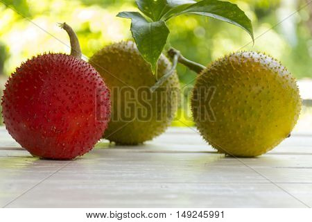 Baby Jackfruit on wooden white background. fruit for health and stillife.