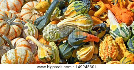 Freshly picked colorful squash on display at the farmers market