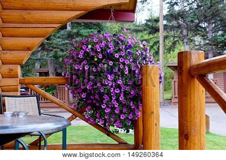 Roche Miette Hot Springs Alberta/Canada - Septermber 2 2016: Wooden vacation rental cabin Pocahontas. Petunia flowers and a table on porch.