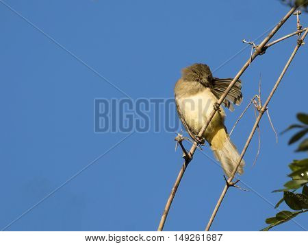 Image of babbler bird perched on tree branch.