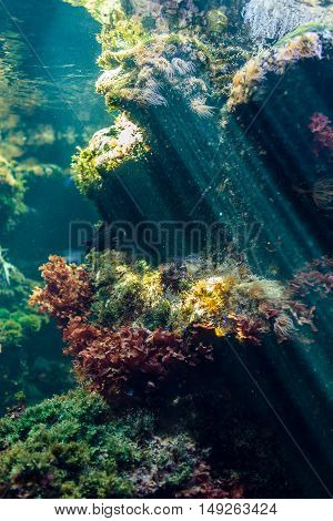 Reef Ecosystem With Anemone And Plants