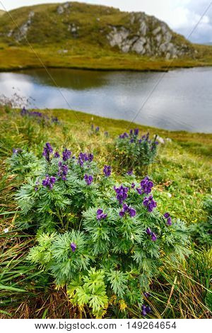 Mountain Flowers By A Glacial Lake