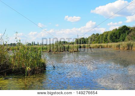 Lake with green algae and duckweed on the water surface