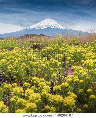 Mount fujisan Flower Garden kawaguchiko in Japan.