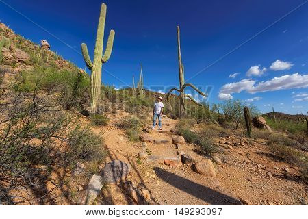 Tourist in the Beautiful Saguaro National Park near Tucson, Arizona